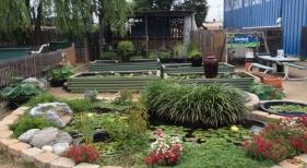Custom Water Garden