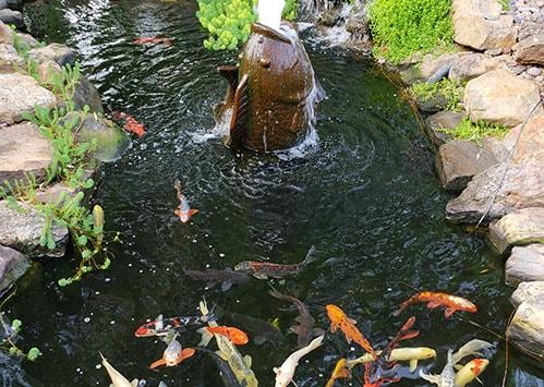 Water Garden & Koi Pond